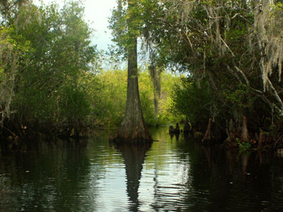 Okefenokee swamp essay prompt
