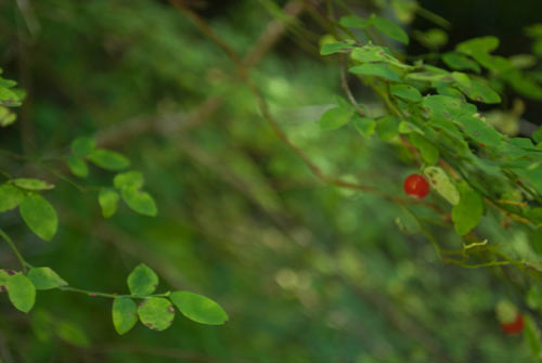 Photo of some berries.